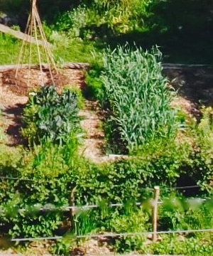 Intro to Permaculture - Free Permaculture Course