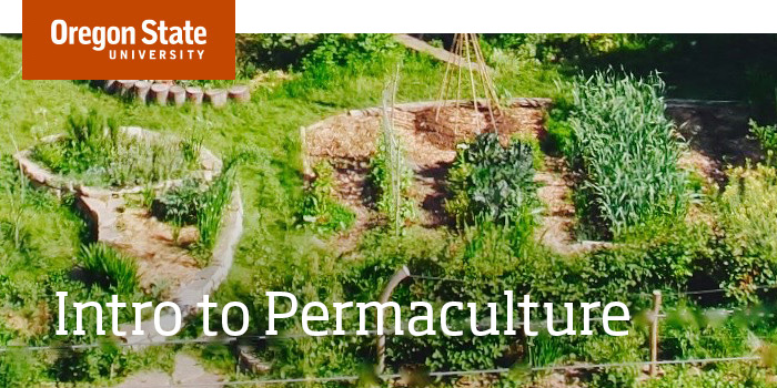Intro to Permaculture - Free OSU Permaculture Course | Open